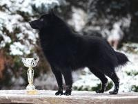 Whisky (Connery Framilla - Black Tie and Tail Avidore x Ab Nunc SEMIRAMIS) - www.taien.cz