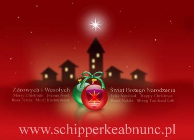 Wesołych i pogodnych Świąt Bożego Narodzenia oraz spełnienia marzeń z okazji nadchodzącego Nowego Roku życzy hodowla AB NUNC.